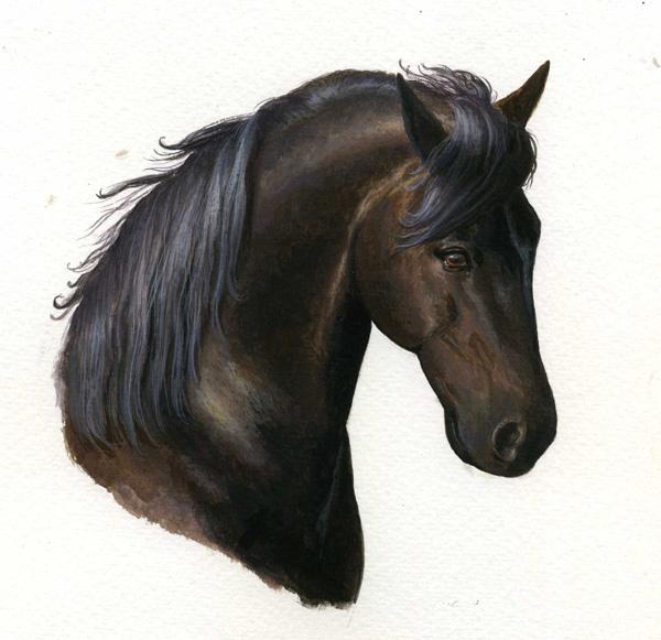 photo cheval portrait